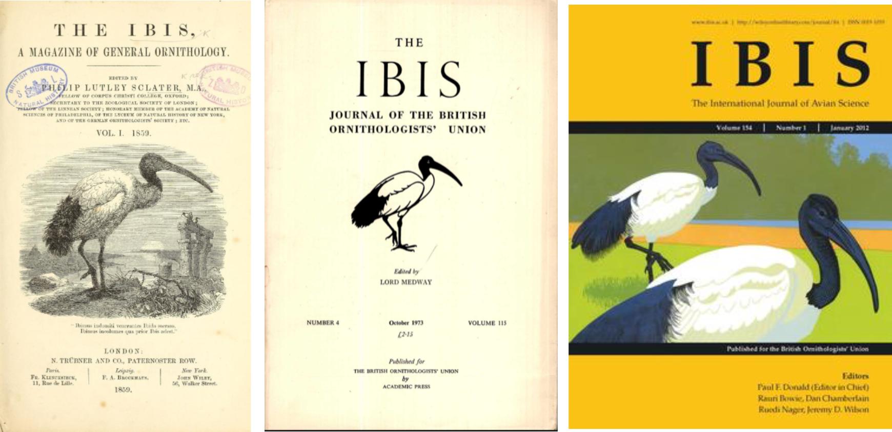 Ibis A New York worshipping the sacred ibis - american ornithological society
