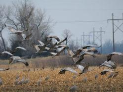 cranes and power line