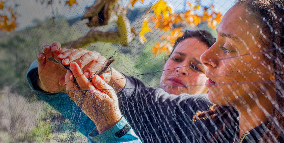 Ornithologists handling bird