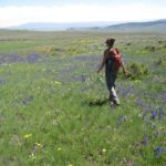 researcher walking to sage-grouse lek
