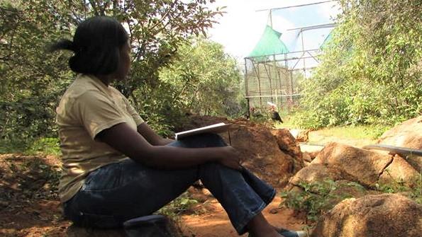 researcher observing captive birds