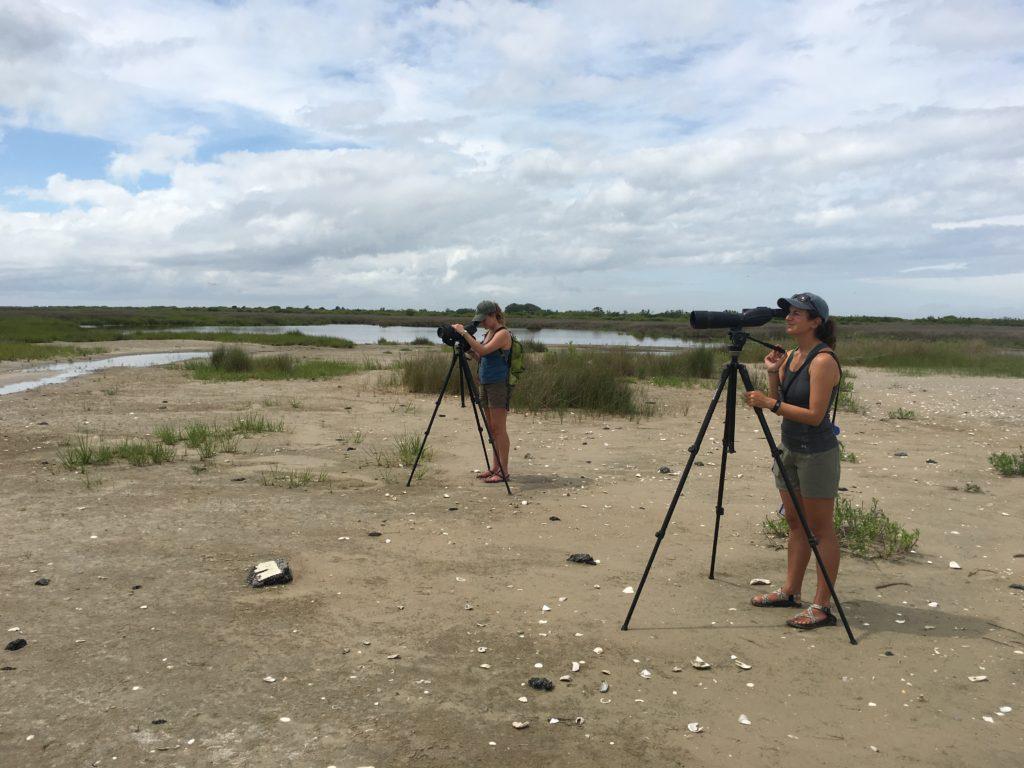 plover surveyors