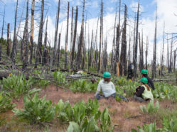 researchers in burned woods
