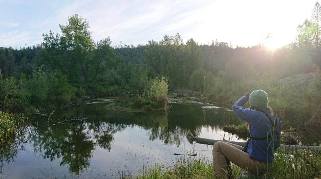 researcher looking for birds at riparian field site