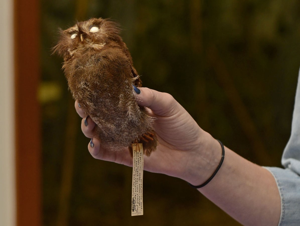 photo of a taxidermied owl
