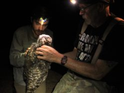 two researchers handling a captured owl