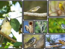 collage of photos of multiple songbird and woodpecker species