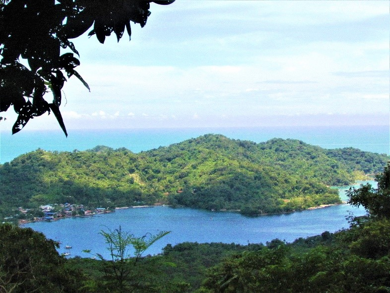 a view of a coastal tropical rainforest