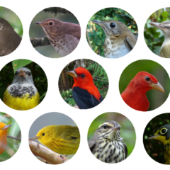 eleven individual photos of different colorful songbird species