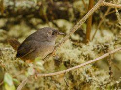 small brown bird