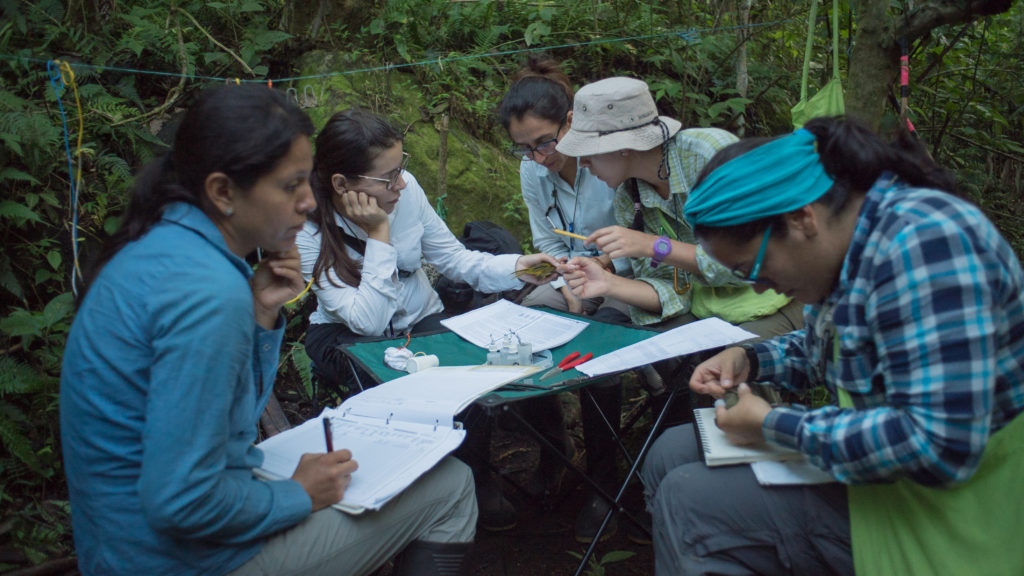 a group of scientists sitting around a table in the forest, making notes, some holding birds