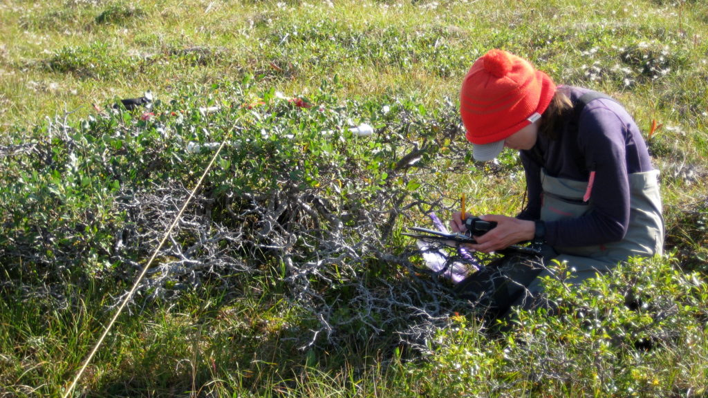 a young woman measuring vegetation on the tundra