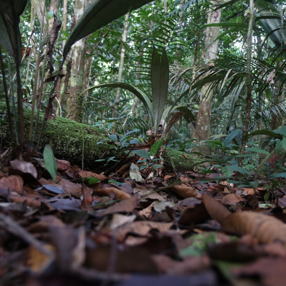terrestrial-insectivore-perspective